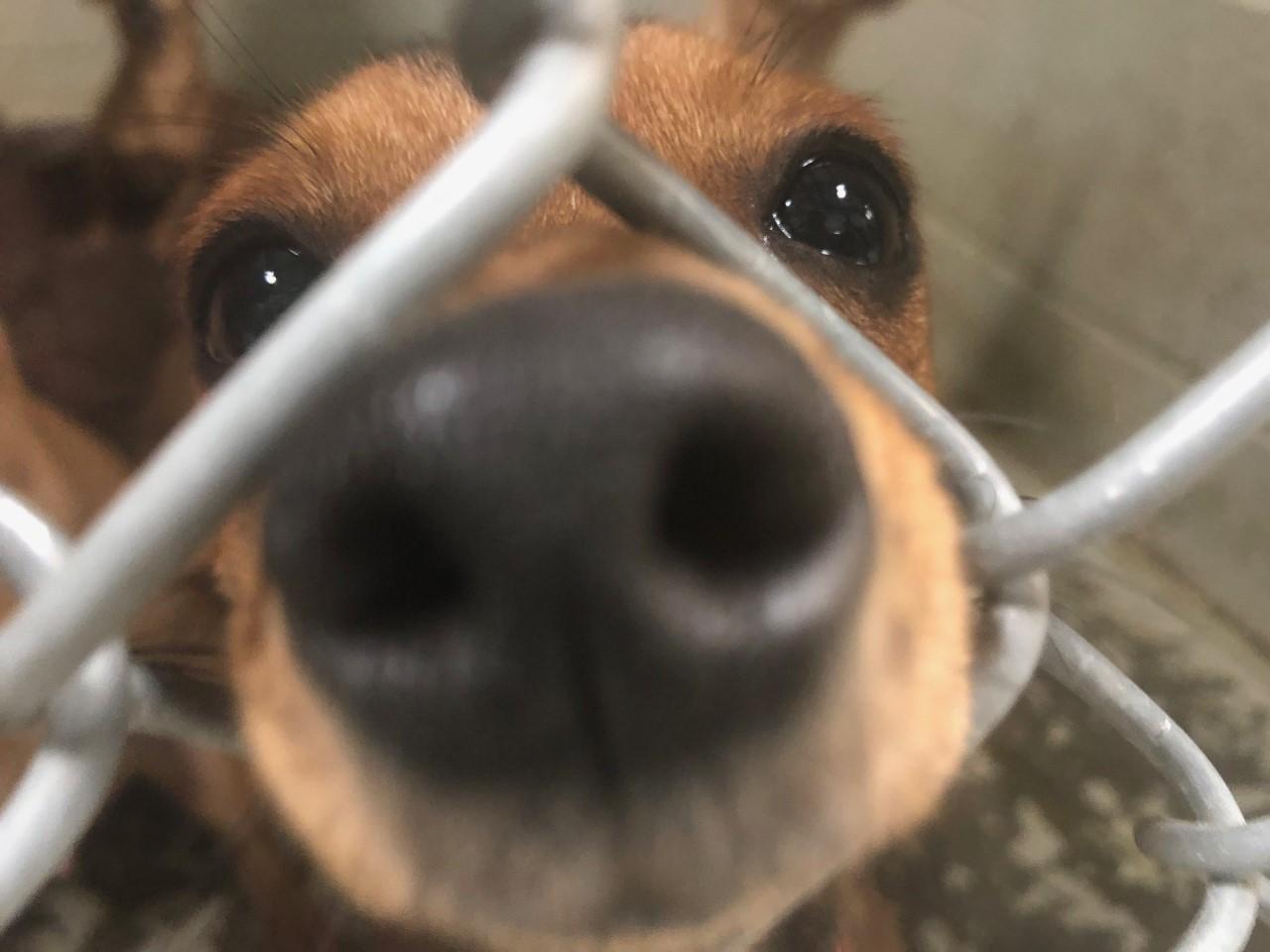 puppy3_1554317924754.jpg