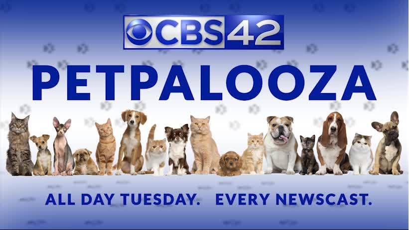 Pet Palooza! Tuesday! All day. Every newscast.