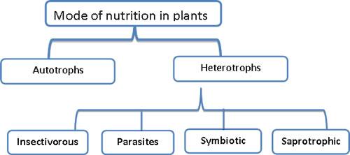 Dgindiaedu Nutrition In Plants Onlineexamdgindia Edu