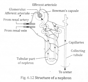 NCERT Solutions for Class 10 Science Chapter 6 Life Processes 2