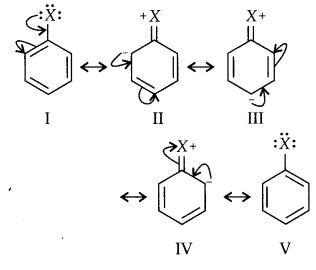 NCERT Solutions for Class 12 Chemistry Chapter 13 Amines 57