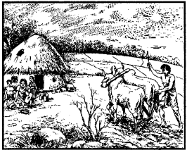 NCERT Solutions for Class 8 Social Science Geography 4 Agricultural 2