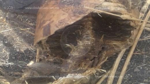 Localizan restos humanos putrefactos en Puruándiro