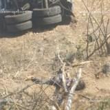 Vuelca pipa de combustible y conductor pierde la vida