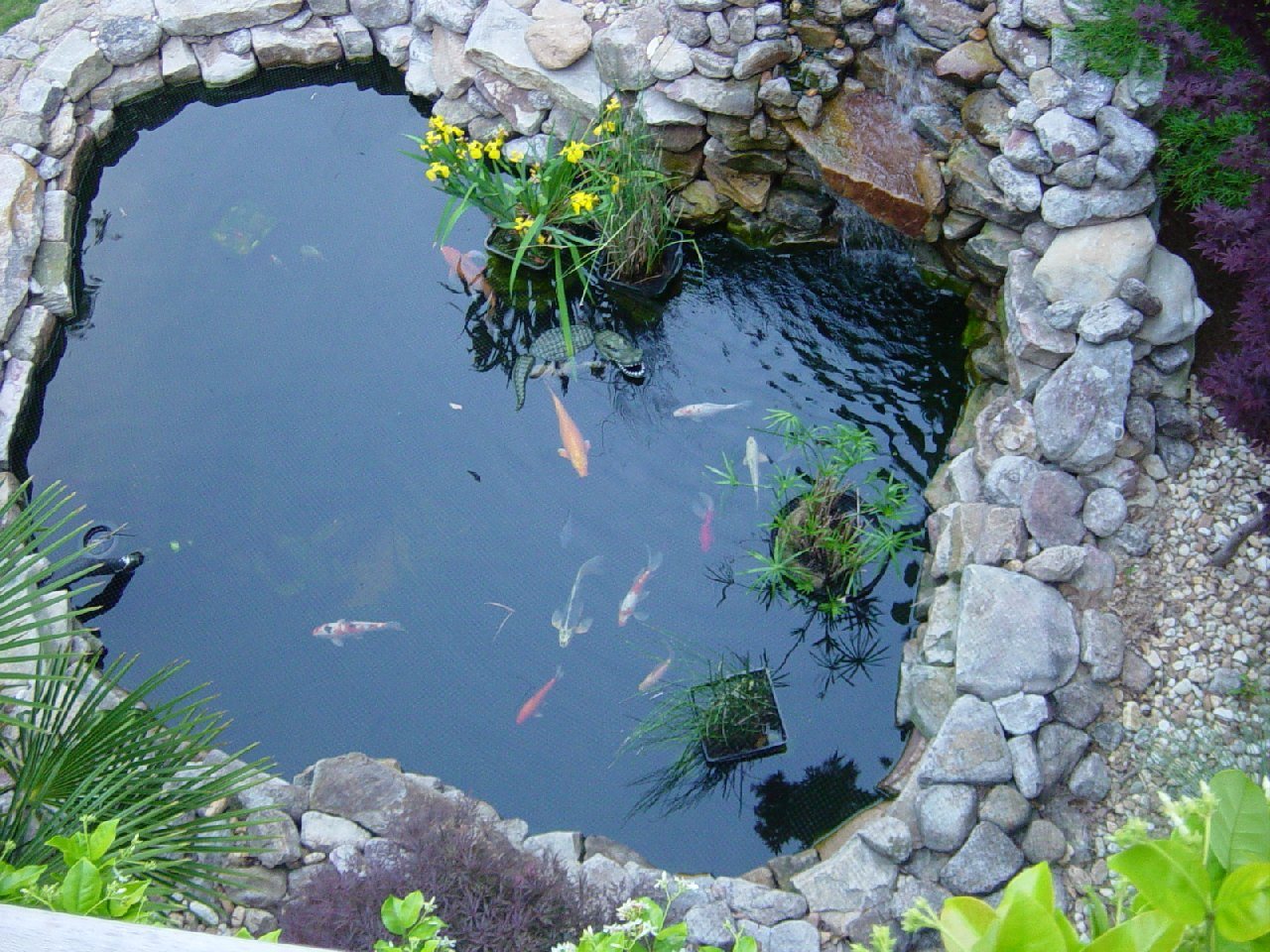 What Plants Put Around Pond