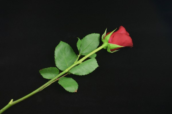 A rose by any other name…