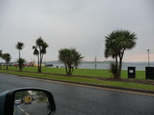Palm trees in Scotland