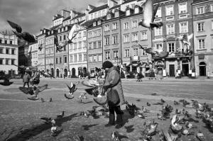 Pigeons, Warszawa, Poland
