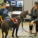 Woman petting therapy dog
