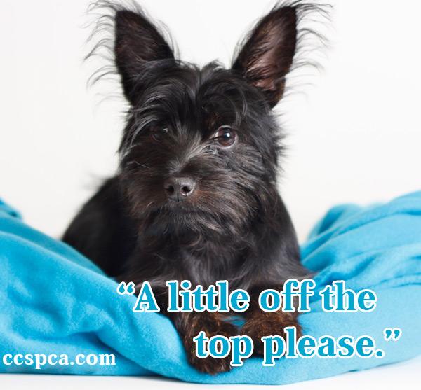Cute Puppy Caption A Little Off The Top Please Central California SPCA Fresno CA
