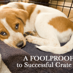 A Foolproof Guide To Successful Crate Trainingtips And Advice Crate Training