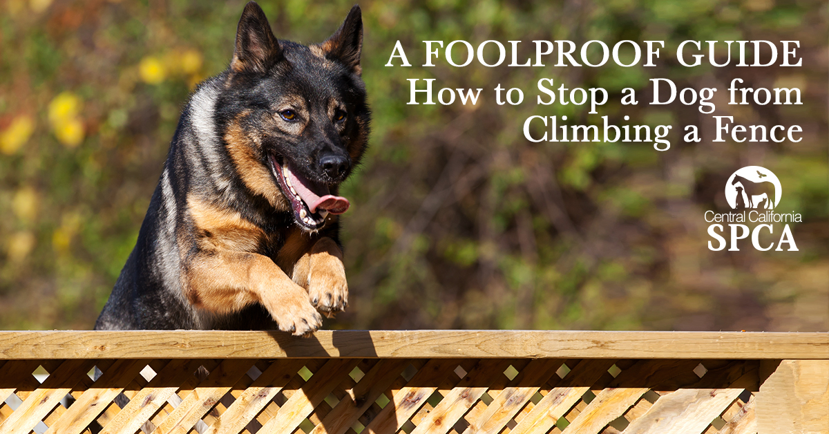 A Foolproof Guide How To Stop A Dog From Climbing A Fence