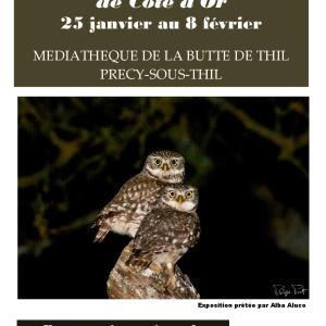Exposition Photos – Les Rapaces nocturnes de Côte d'Or