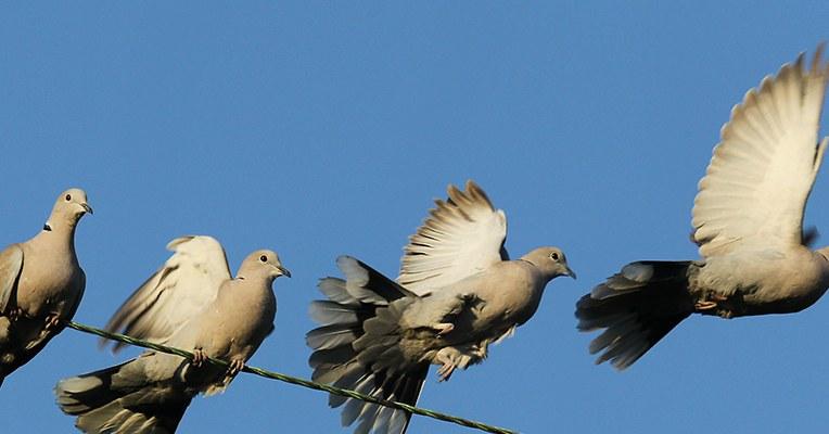 Elegant Montages Show the Beauty of Birds in Flight – CCTVSG.net