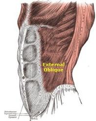 external-oblique