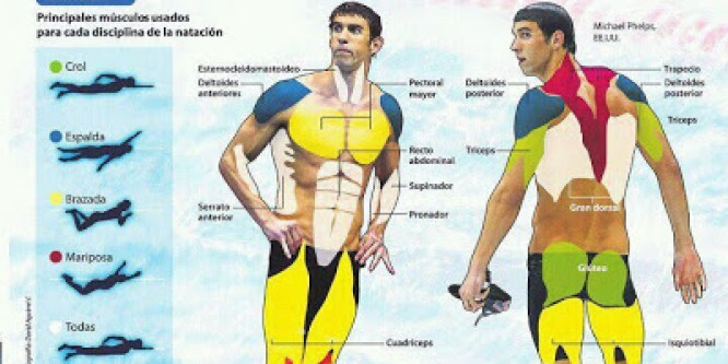 Musculos swimming