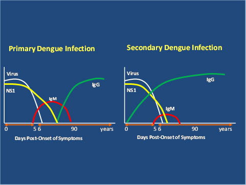 image: showing comparison between primary and secondary infections