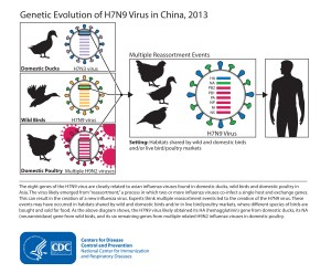 Images of Avian Influenza A H7N9 | Avian Influenza (Flu)