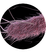 Graphical illustration of ecoli