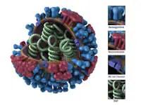 Generic Influenza Virion's Ultrastructure