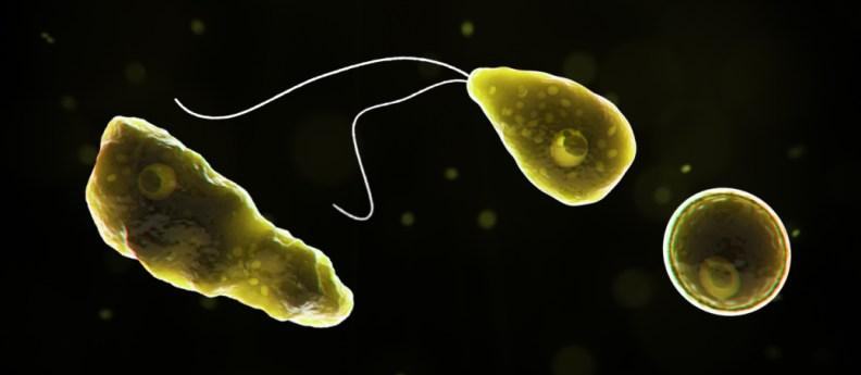 Primary Amebic Meningoencephalitis (PAM) - Naegleria fowleri ...