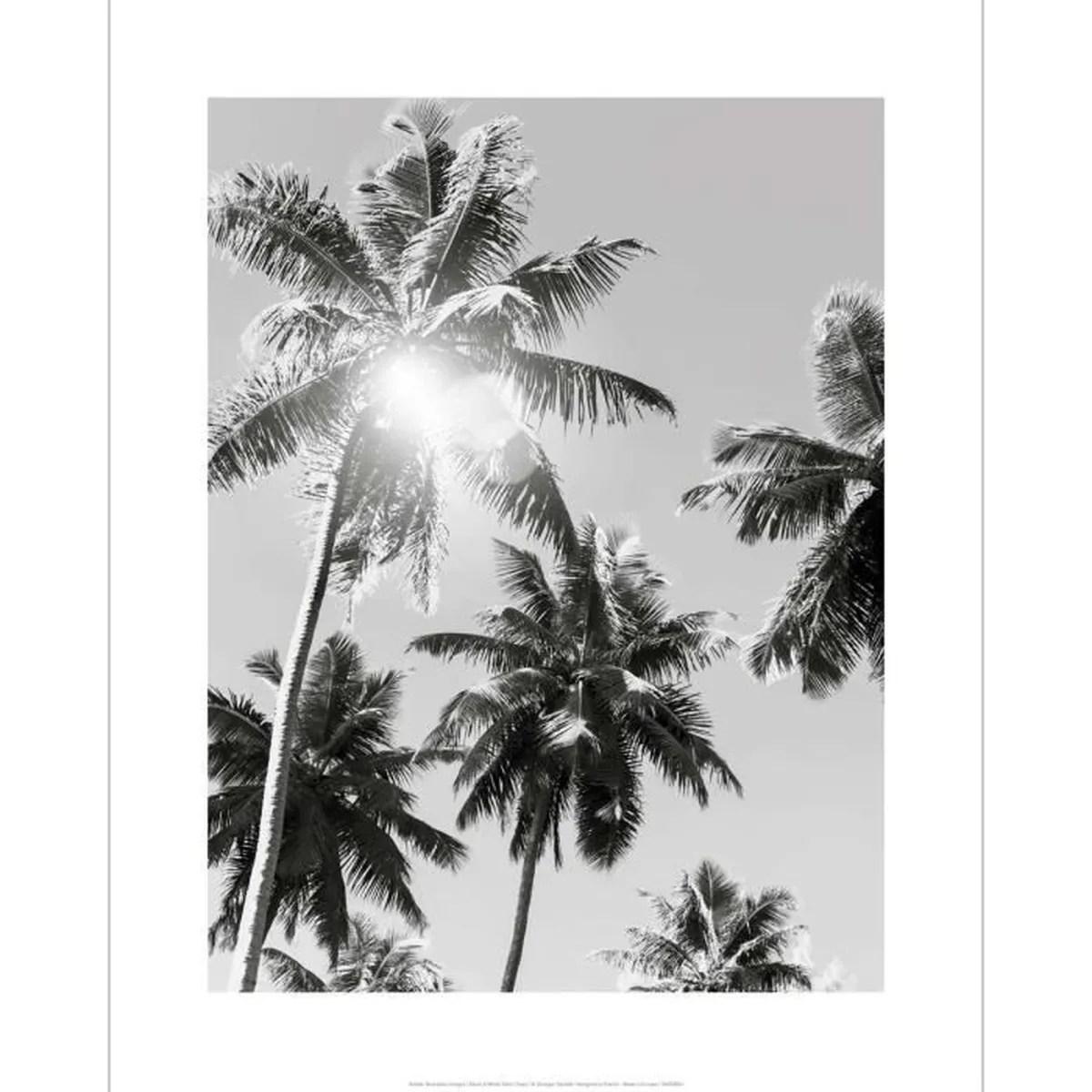 affiche noir et blanc photo vintage palmiers
