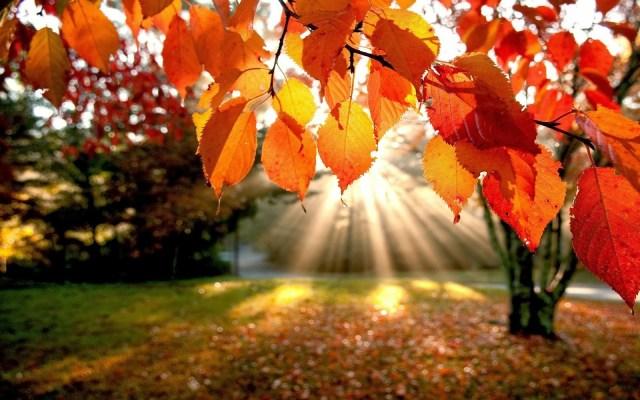 fall-flowers.jpg