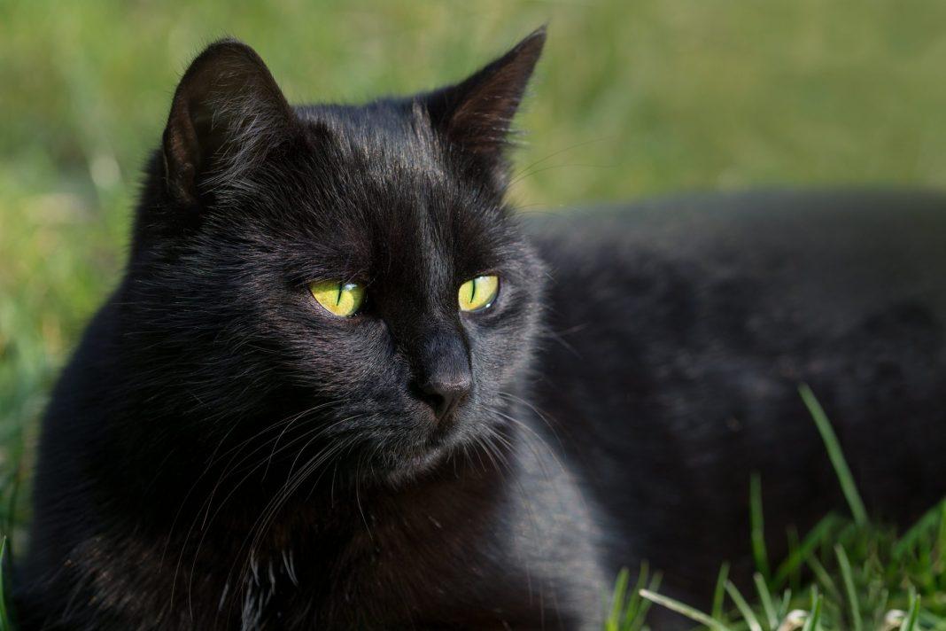 black-cat-day-1.jpg