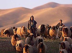 Kurdish boys herding sheep in Iraq (photo: oppression.org)