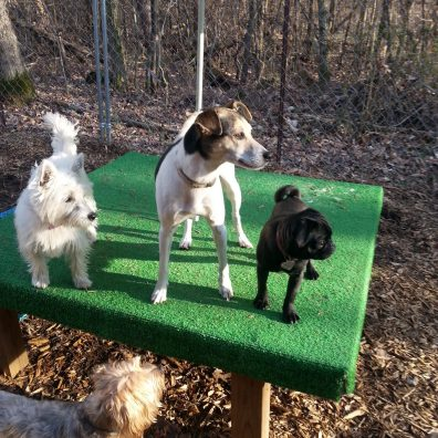 Dogs at Play - Boarding Service