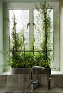 Indoor Plants 09