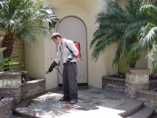A professional pest control service 3