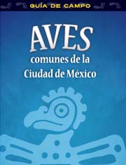 Aves comunes de la Ciudad de México