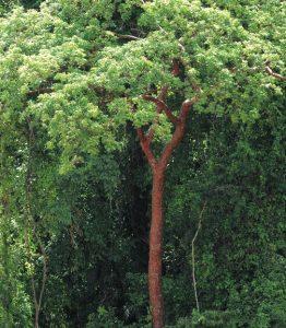 2-3_vegetacion_selva