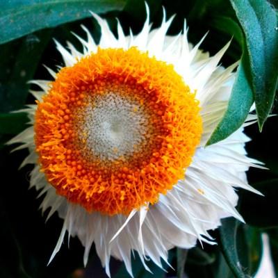 Mandalas em Flores 10