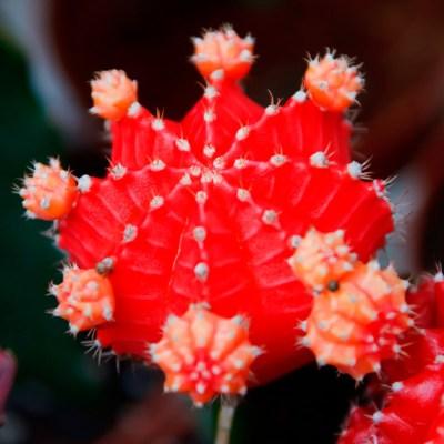 Mandalas em Flores 06