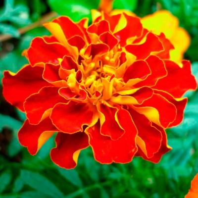 Mandalas em Flores 09