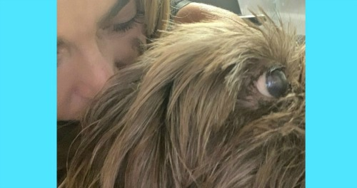 The Bold and the Beautiful Spoilers: Denise Richards' Sad News – Shares Heartbreak Over Loss of Adored Family Dog