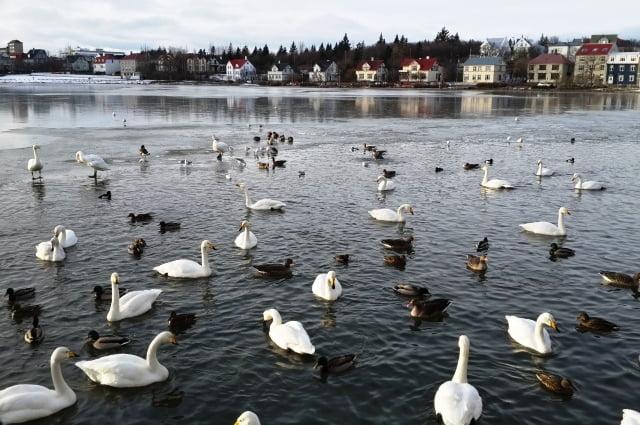 Reykjavik gezilecek yerler