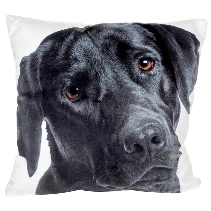 J.D.-lab-cushion