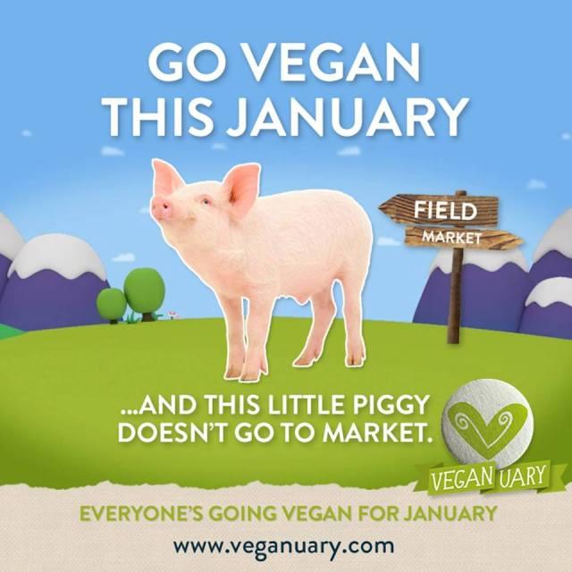 veganuary-pig