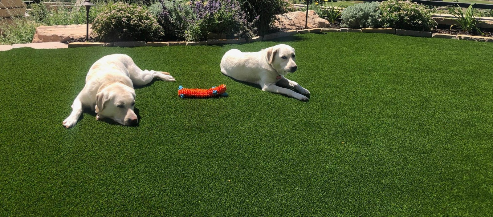 artificial-grass-pet-turf-for-dogs