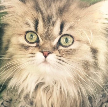 Isabella Cutie Cat