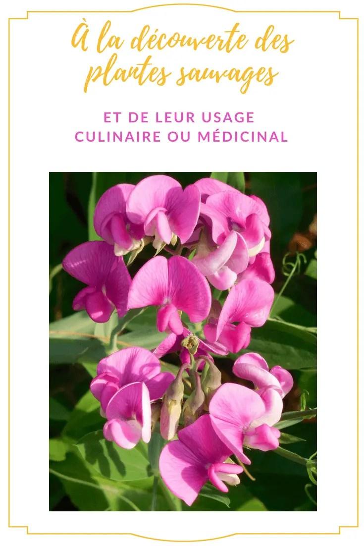 Apprendre à reconnaitre les plantes sauvages - ballade thématique