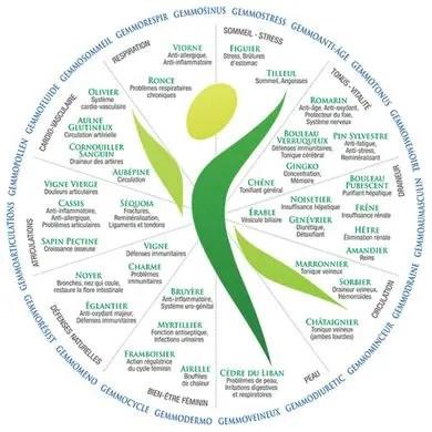 Gemmothérapie: tableau récapitulatif des bourgeons et jeunes pousses en fonction de leur sphère d'action