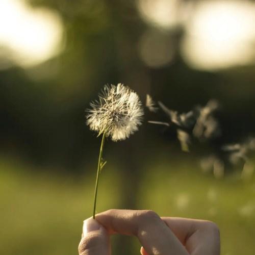 Comment soigner naturellement les allergies liées au pollen?