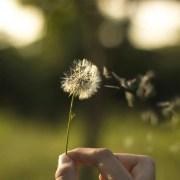 Comment soigner les allergies liées au pollen? 5 remèdes et astuces naturels efficaces