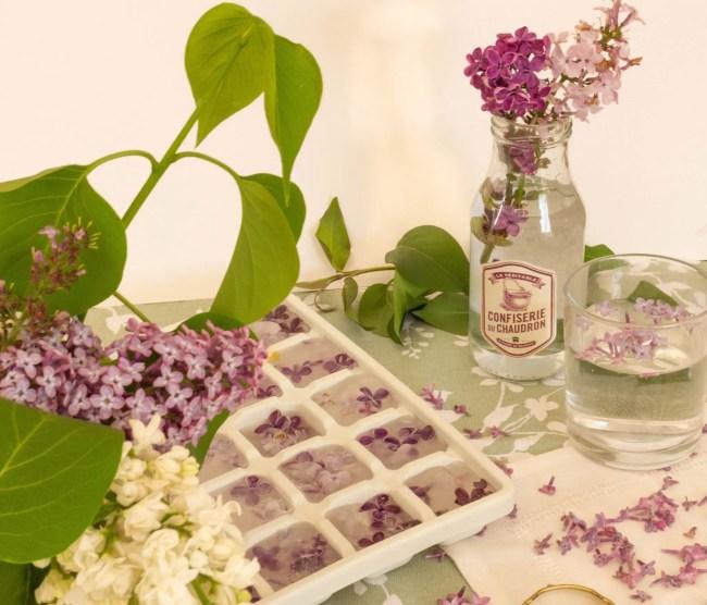 Comment réaliser des glaçons décoratifs à base de fleurs de lilas?
