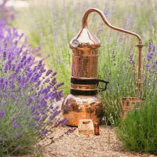 Distillation des hydrolats