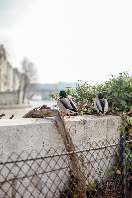 CélineChanPhotographie-Seance-Couple-Engagement-Paris-Ile-de-la-cité-4